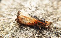 mieren-in-huis-bestrijden-2