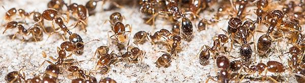 Kaneel tegen mieren