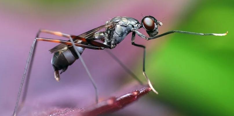 mierenplaag-bestrijden-in-huis